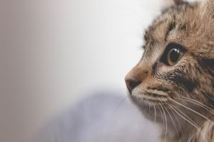 A cat staring off into the distance