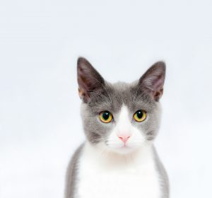 Cat with a white background