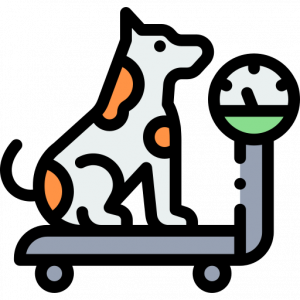 Dog on the scales