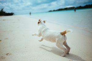 A dog running on the beach